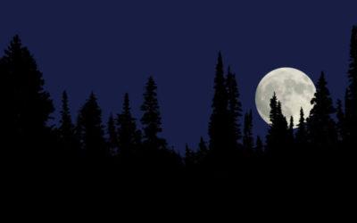 Mondholz – geerntet bei abnehmendem Mond während der Saftruhe.