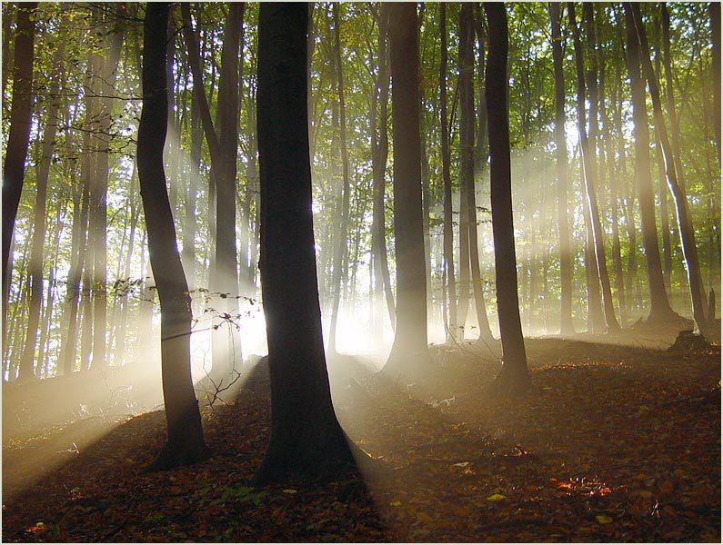 Bote der Urschweiz – Bäume teilen ihre Energiereserven