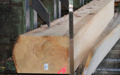 Hohe Wertschöpfungskette an Schweizer Holz